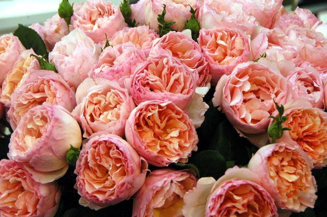 david austin et roses parfum es maison belle fleur. Black Bedroom Furniture Sets. Home Design Ideas